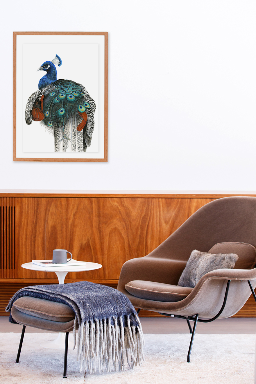 Franco the Peacock by Australian Artist Andrew Howells for Stampede Style www.stampedestyle.com