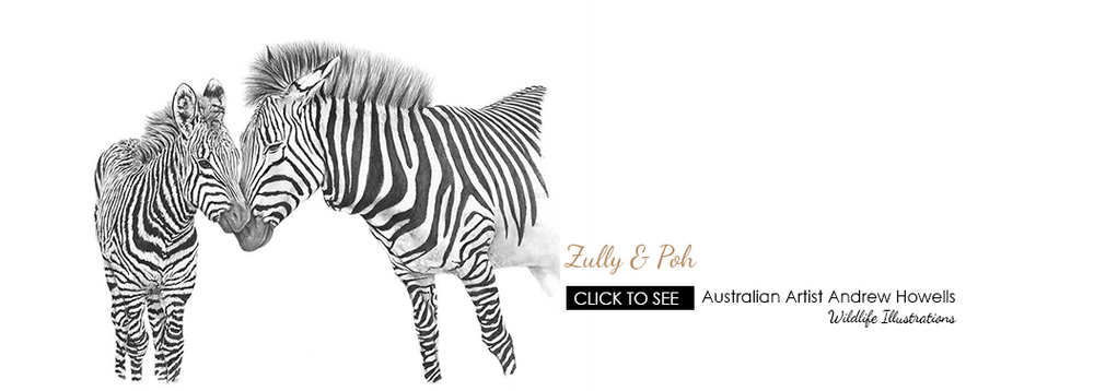 Zully and Poh Zebras by Australian Artist Andrew Howells for Stampede Style www.stampedestyle.com
