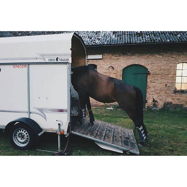 Idag har vi tränat på att gå in i transporten men vi kom inte längre än hit när det tog tvärstopp... Hästvänner.. har ni några goda råd?🐴 #horses #horse #horses #hästar #equestrian #heste #pferd #ride #man #rida #ridning #ryttare #helsingborg #stables #transport #hästsläp #equestrian