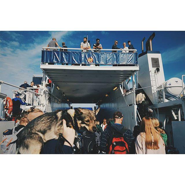 Mot Ven! 🌞 #ven #uraniborg #ventrafiken #hven #skåne #sverige #sweden #boat #documentary #dog #friends #water #island