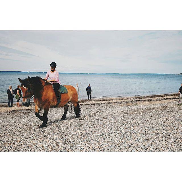 Bamse 🐴 #ardenner #horse #horses #hästar #equestrian #heste #pferd #beach #ride #ridestyle