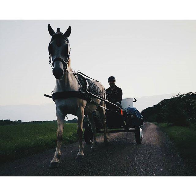 Då är vi äntligen igång med körningen. Lilla Lady tyckte precis som kusken att detta var toppen och skitkul 🐴😀 #horse #horses #hästar #equestrian #heste #pferd #ride #equestrianlife #rockard #sulky 📸@rebecca93chopin