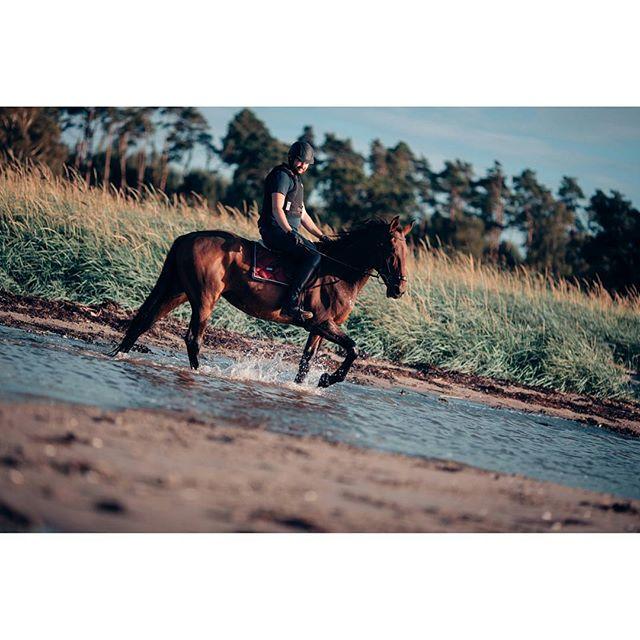 Idag tog vi transporten och åkte till Farhult och red längs stranden och i havet. Såå mysigt! 🐴 Hon hade lite problem att gå i vattnet men med lite övning så gick det till slut 😎 #horse #horses #hästar #equestrian #dressage #hippson #dressyr #heste #pferd #ride #equestrianlife #häst #hästar #equine #esstockholm #beach #strand #horsephoto #horsesofinstagram #canon #1dx 📸@rebecca93chopin