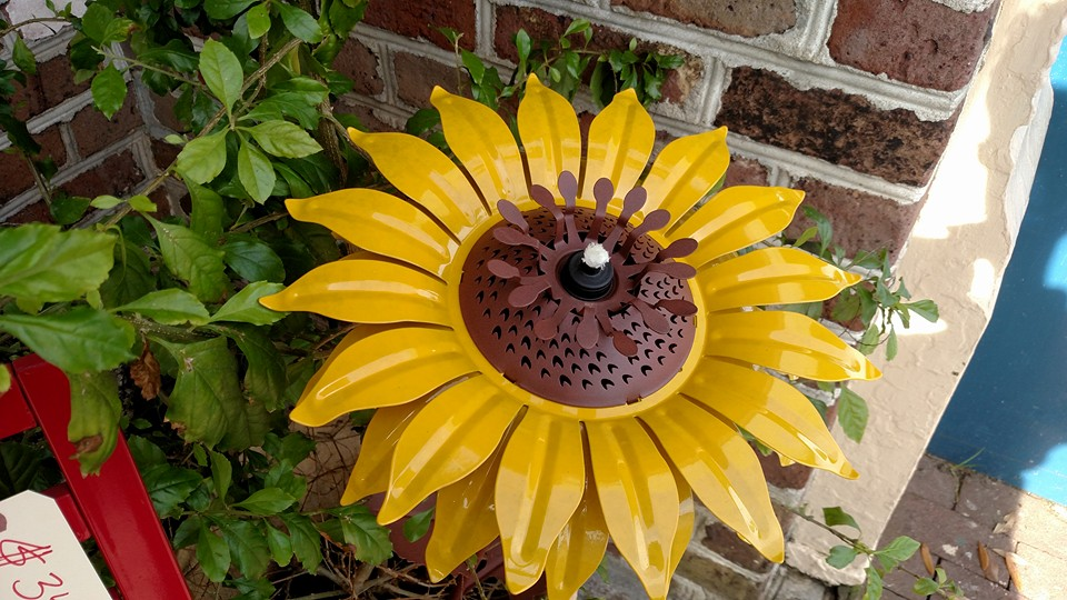 GS - sunflower outside.jpg