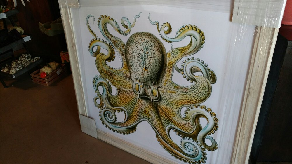 a big wild octopus!  How fun!