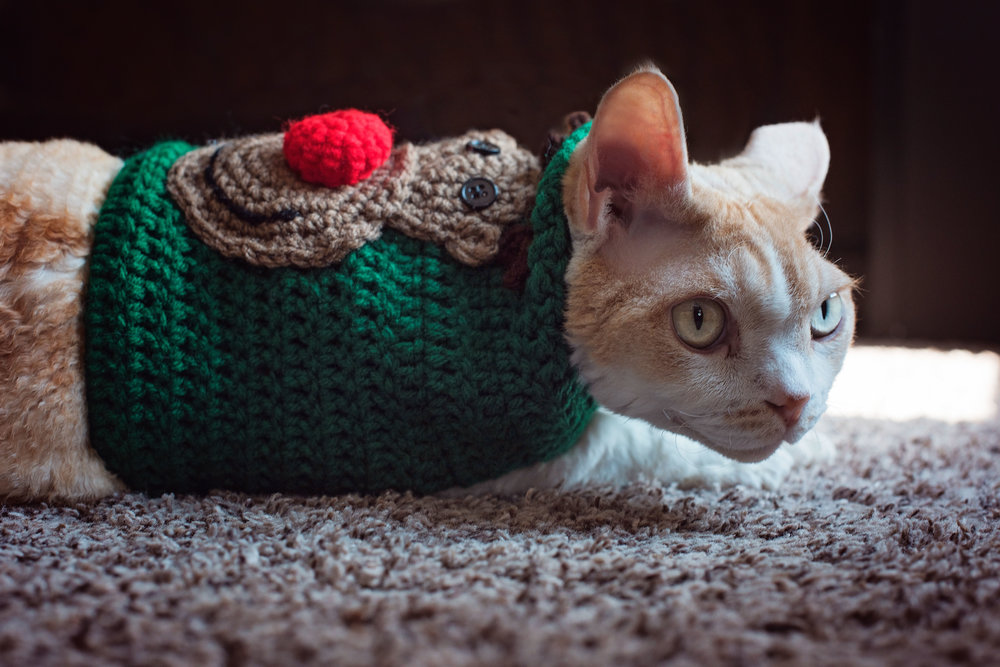Devon Rex Clooney wearing a Christmas Ugly Sweater Cincinnati Ohio Remember When Portraits