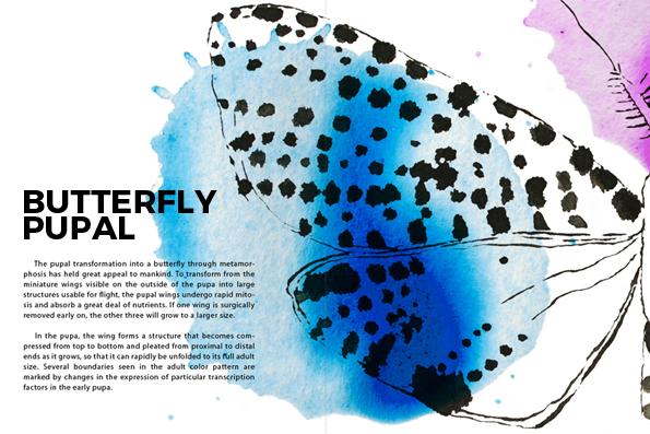 SarvenazDezvareh-Butterfly-WEB-SITE 2017.jpg