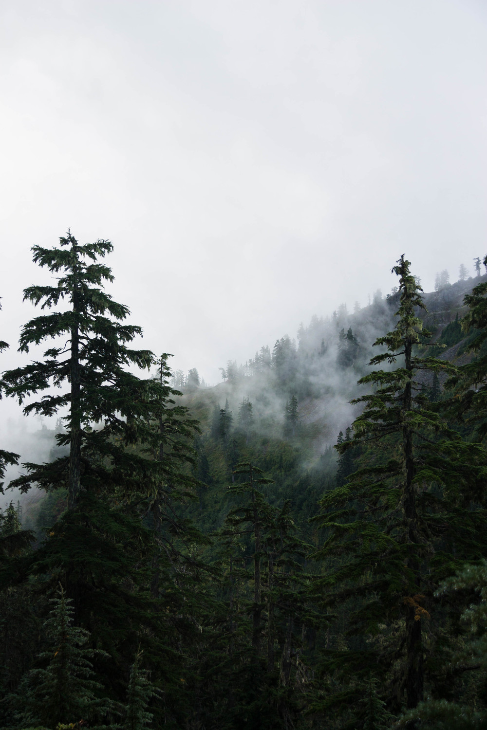 Wet, foggy forest