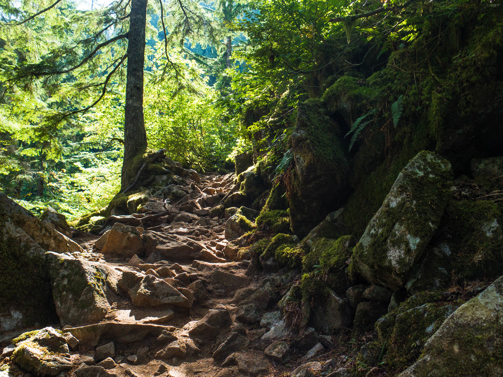 Rooty, rocky, mossy trail to Lake Serene