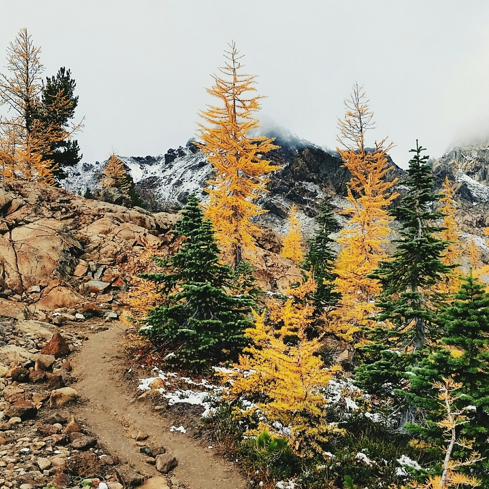 Definitely hope to see golden larches again