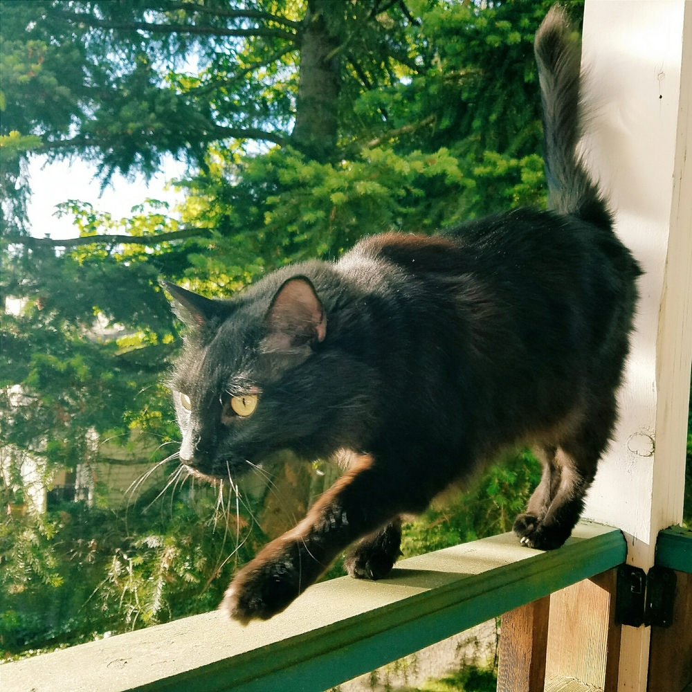 This guy likes to pretend he's an adventurous outdoor cat...