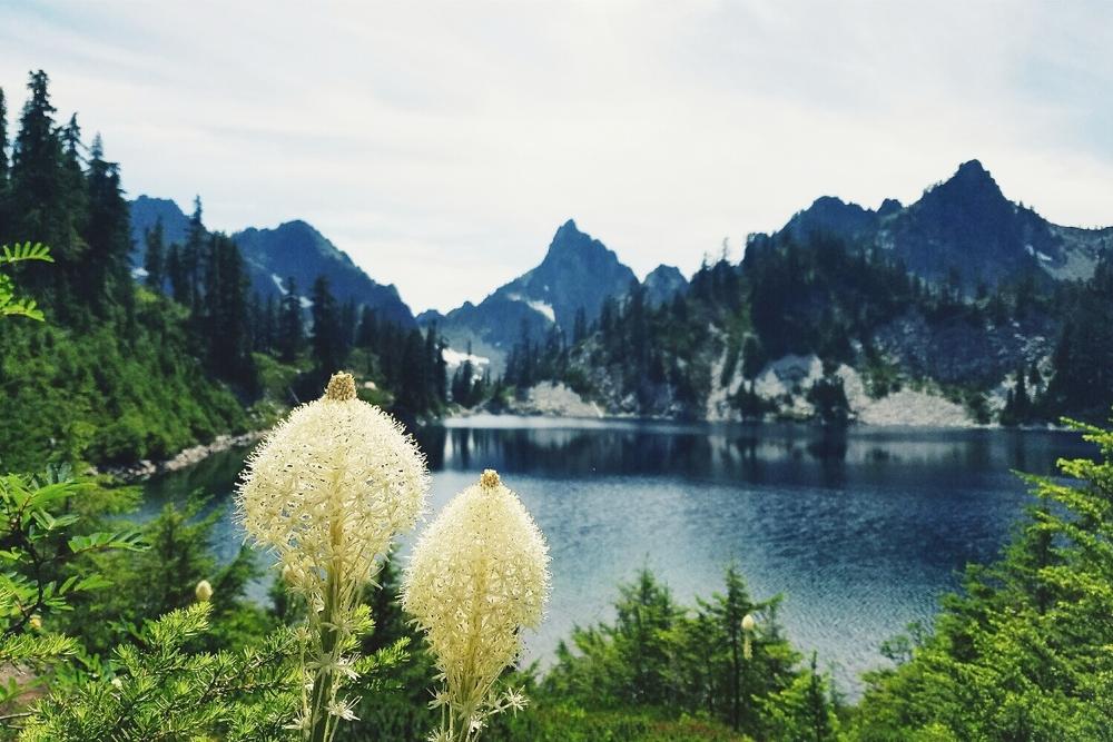 Beargrass at Gem Lake