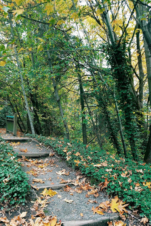 Fall views around home