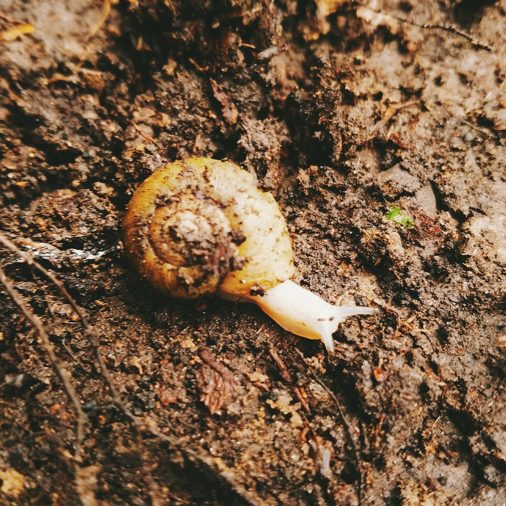 I unearthed several tiny snails while digging through the top layer of organic soil. Sorry for waking you early for spring little guy!