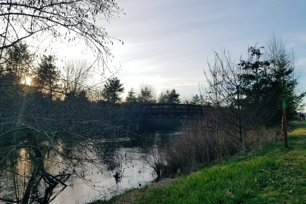 Longer days mean time for evening walks along the Sammamish River