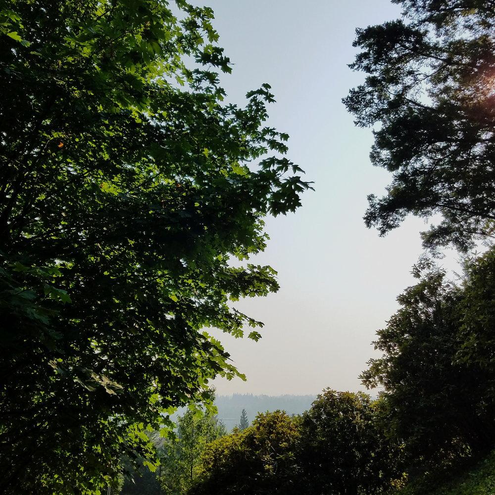 Smoky summer views