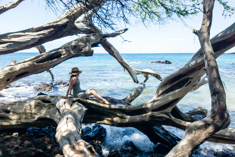 New favorite beach on the Big Island! So many sculptural trees providing plenty of shade