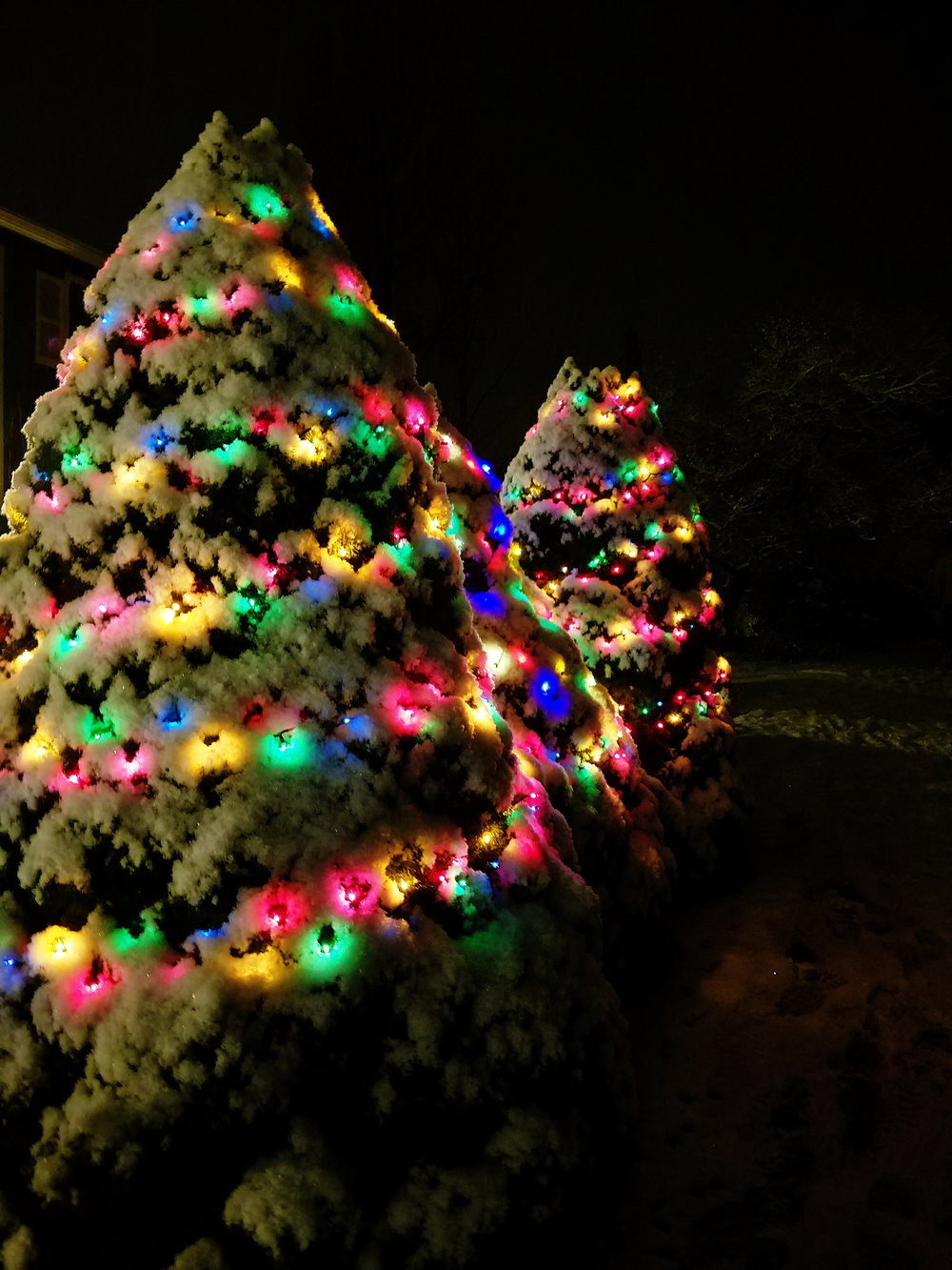 The snow covered trees made the Christmas lights look even prettier