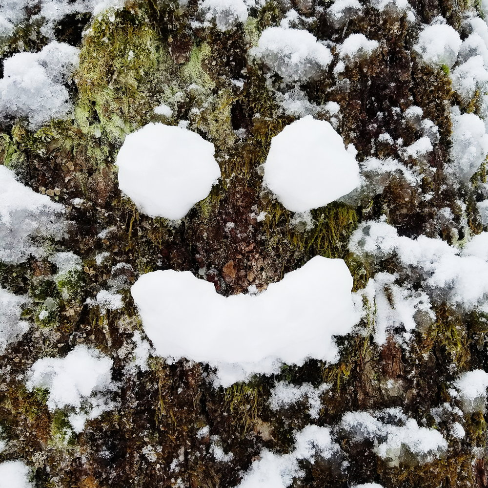 The trees were happy to see me too!