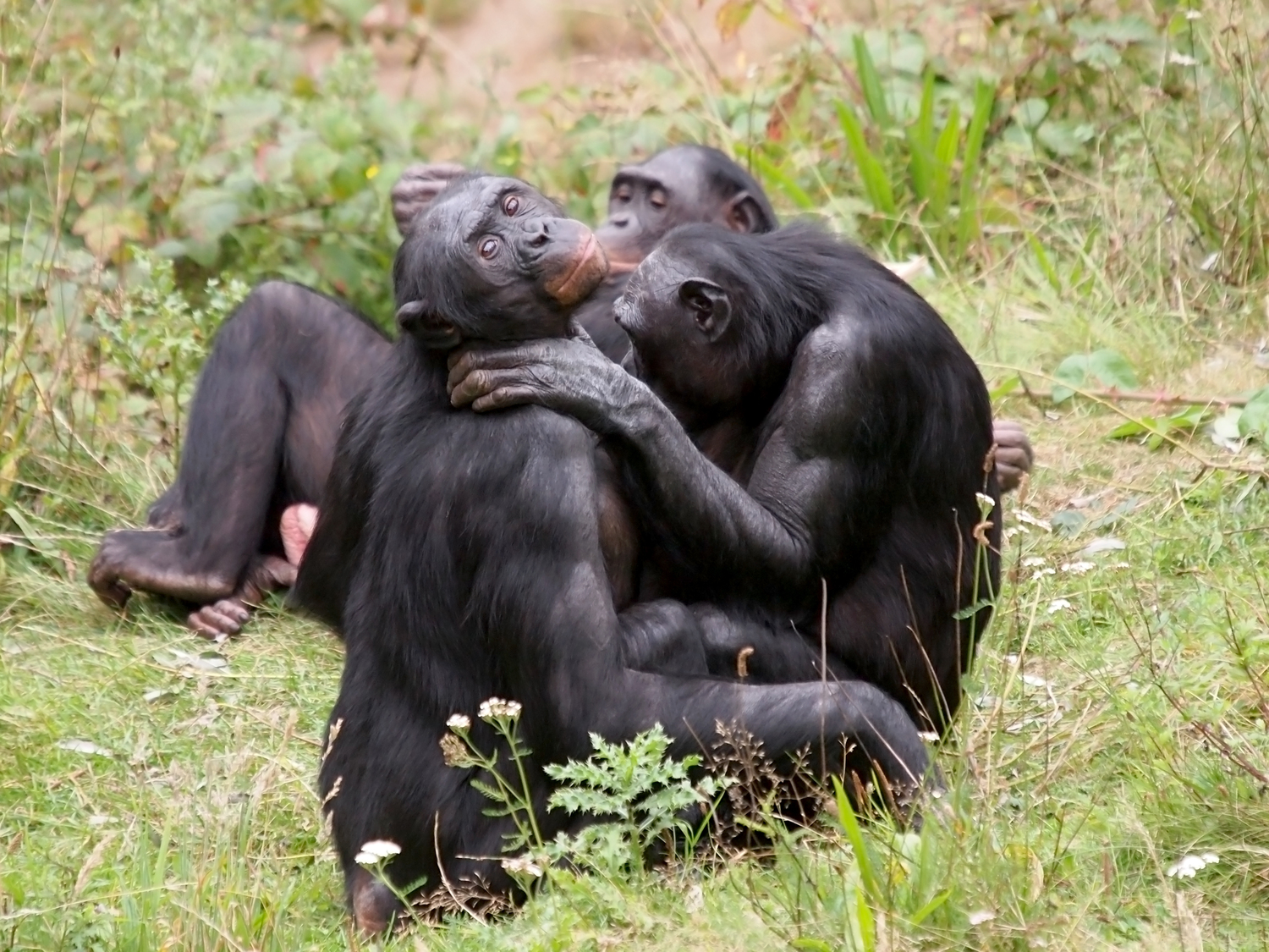 Give the people some sexual inspiration  show them the bonobo ...