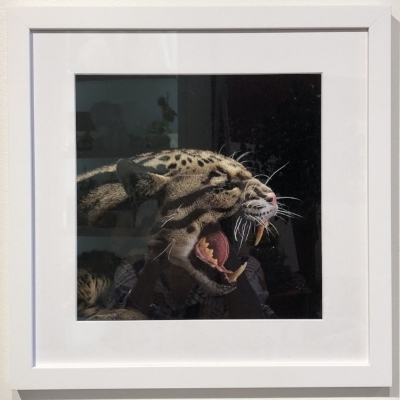 Jaguar by Vince Musi | $300 framed