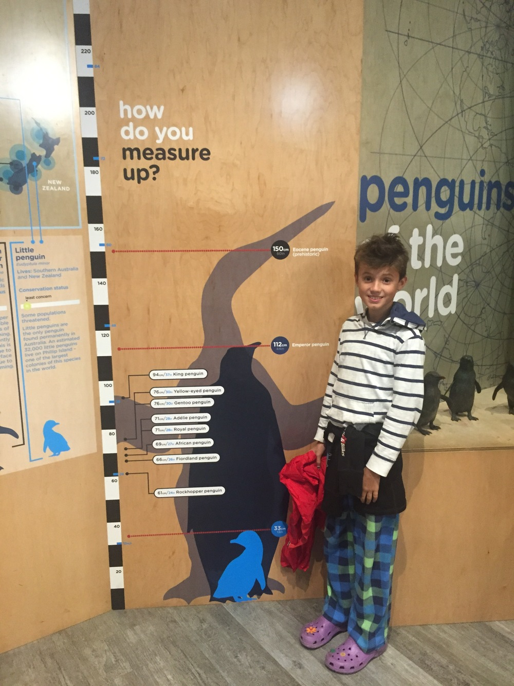 At the Penguin Parade.