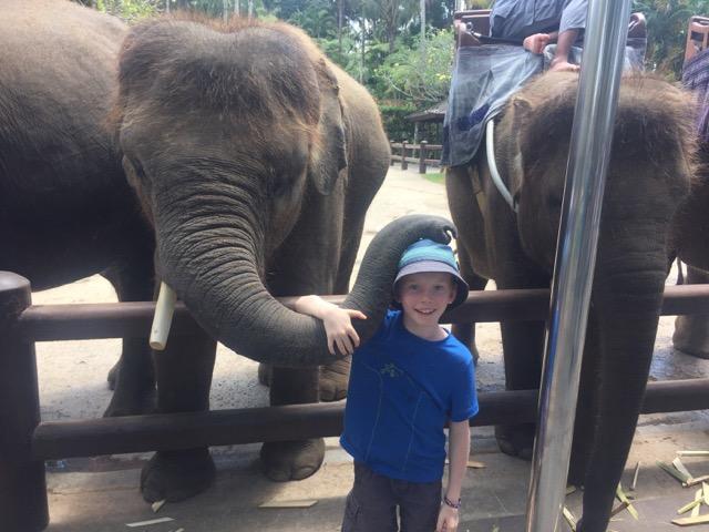 Max - loving the elephants,