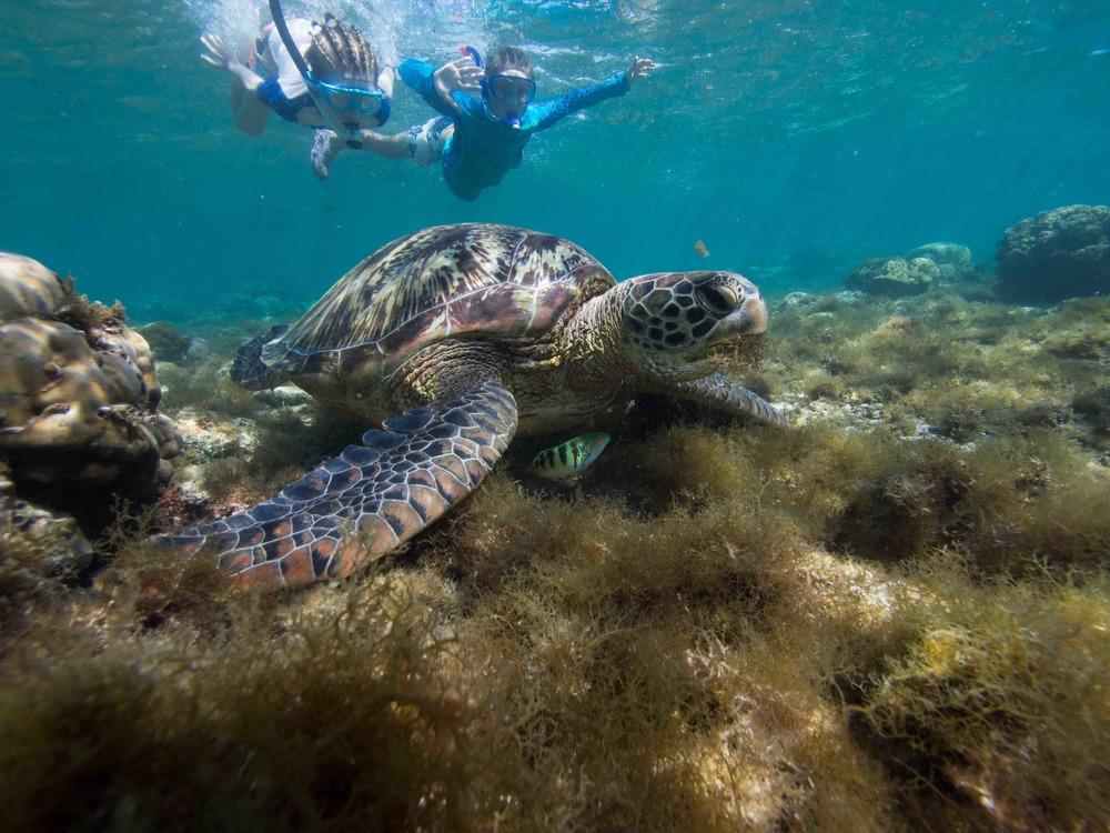 Turtles copy1.jpg