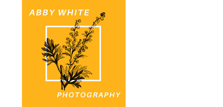 abby white photography +  videography
