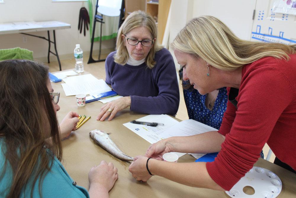 FAM Cohort educators examine a specimen during a scientific illustration lesson.