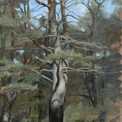 """Tree""  by Tanya Harsch"