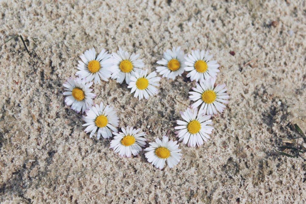 daisy-.jpg