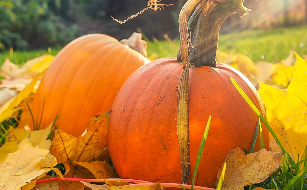 LA Arboretumoffers Family Adventure Classes! - Pumpkin Decorating with all natural materials!