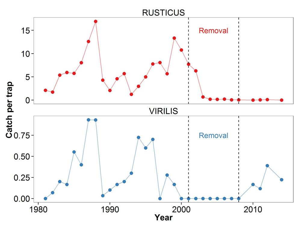 Catch rates of rusty (invasive) and virile (native) crayfish from 1980-2014. Rusty crayfish were experimentally removed via intensive trapping from 2001-2008. Data courtesy of the North Temperate Lakes LTER program.