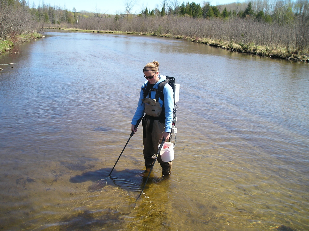 Electrofishing for sea lamprey larvae in Michigan.
