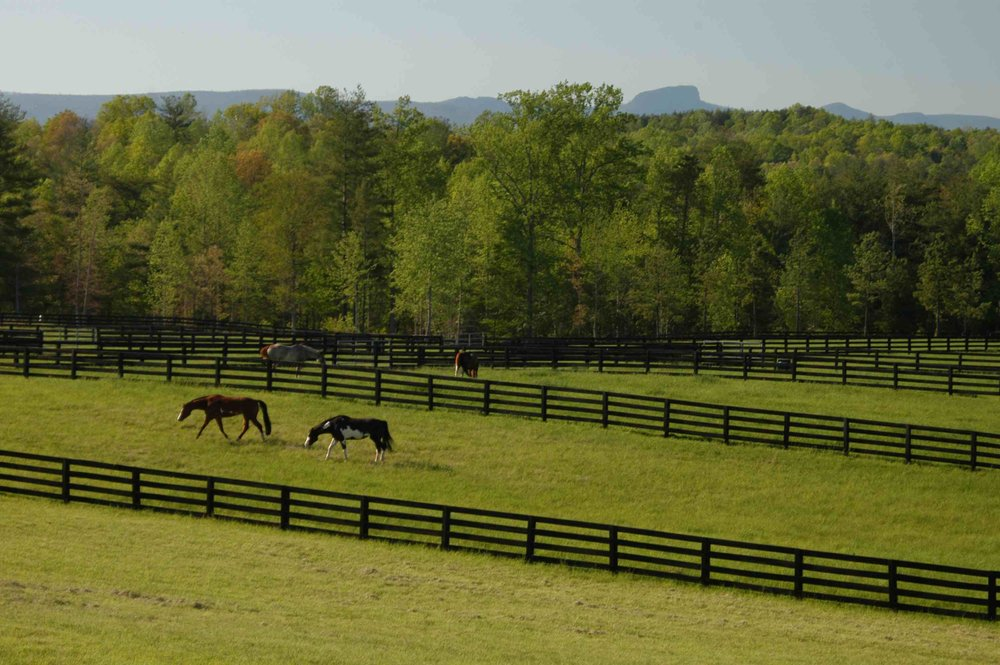 CRC residents enjoy daily views of horses grazing.
