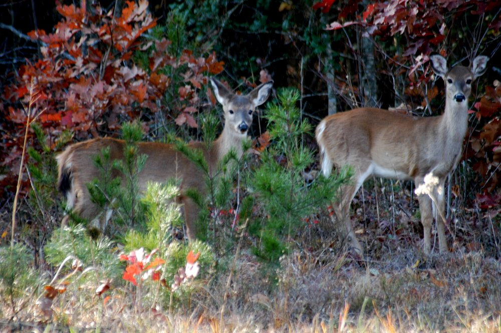 Surrounded by nature, residents often see deer and other wildlife at CRC.