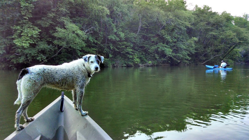 Dogs love canoeing too!