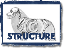 Click - Structure is the Foundation of the Dog