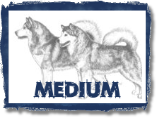 Click -Medium Enhances Purpose in Dog Drawings