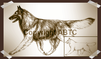 Belgian Tervuren Illustrated moving Draft and Final Drawing