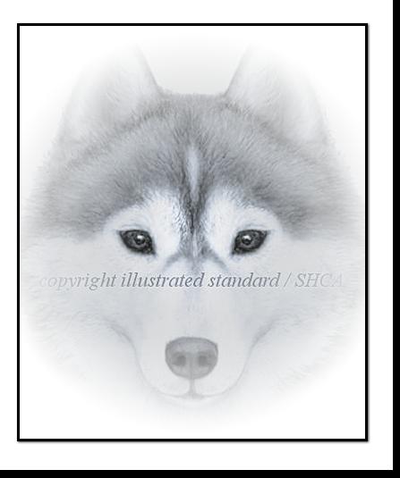 Siberian Husky head Style Example