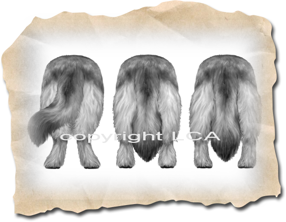 Leonberger Illustrated Standard - Correct to Faulty Rear