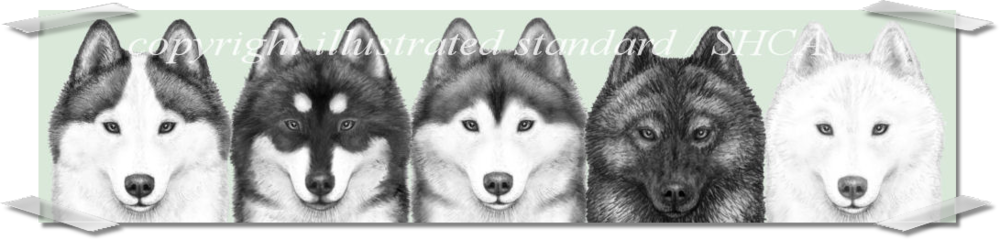 Siberian Husky Club of America - Illustrated Breed STandard Drawings in Pencil with shaded OVerlay Demonstrating Different markings and Coat Color on the Same Dog head
