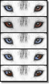 Eye Color Comparison in the Siberian Husky - Drawings from the SHCA Illustrated Standard