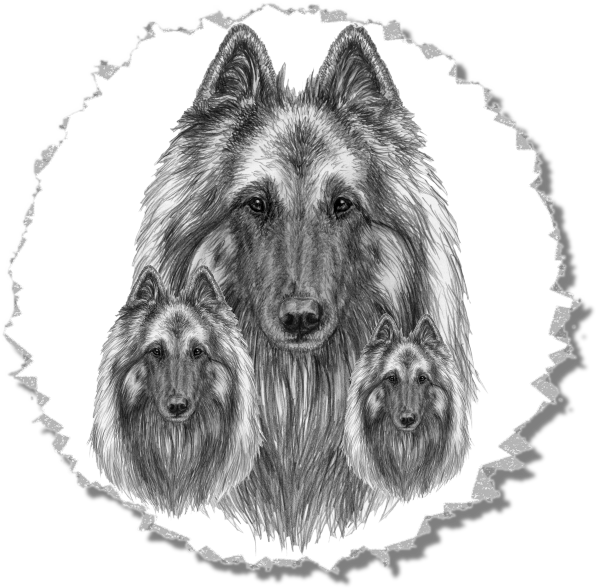 The Same Drawing in Different Sizes - Belgian Tervuren Head for the Illustrated STandard