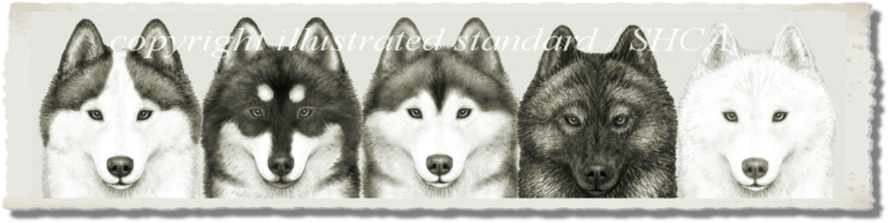 The Effect of Different Markings and Color on the Same head of a Siberian Husky