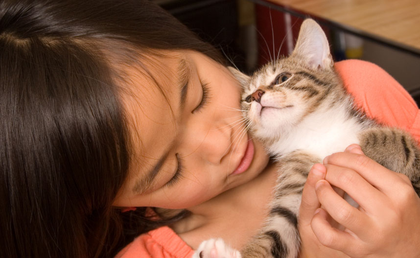 Holistic pet care: the gentle approach to pet health.