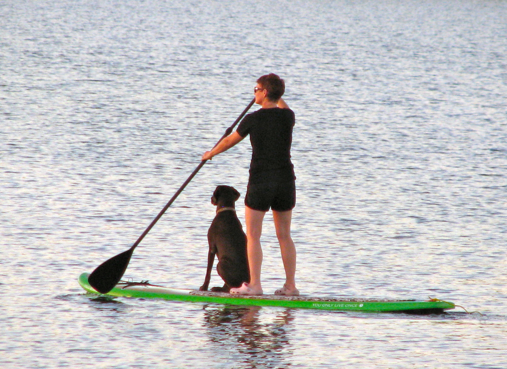 Paddle board companions and a lesson in trust.