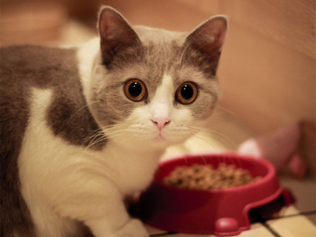 Which is best-canned or dry cat food?